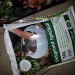 How to make a terrarium: step-by-step guide